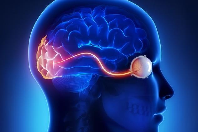 Conexión entre ojo y cerebro